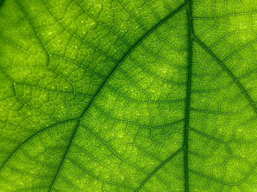 leafpatterns