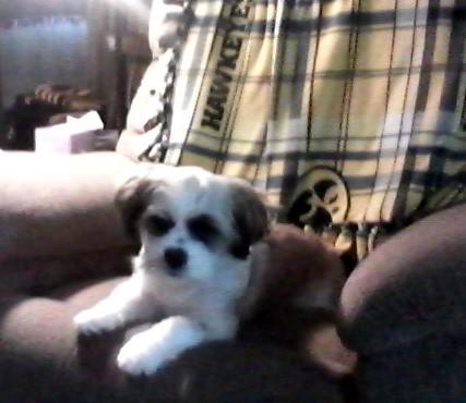 My Dog Bandit